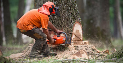 tree removal Austin, TX